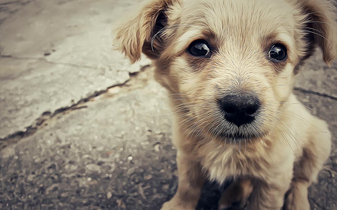 Dia Mundial dos Animais, em 4 de outubro, sugere reflexão