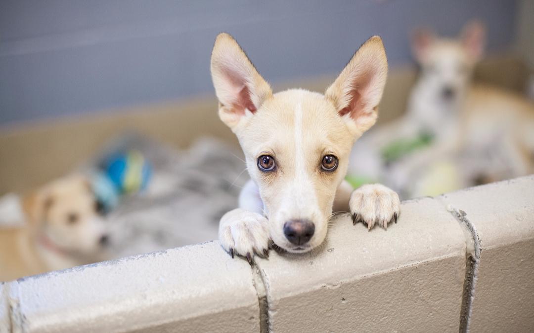 Comprar ou adotar um pet?