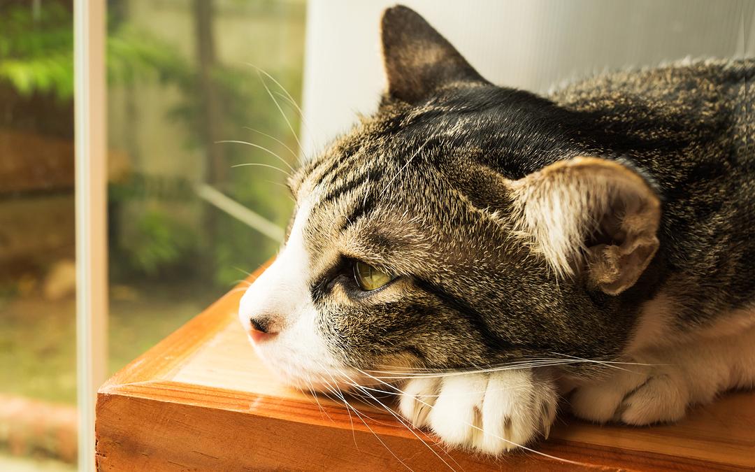 Quando o vômito do gato indica um problema sério?