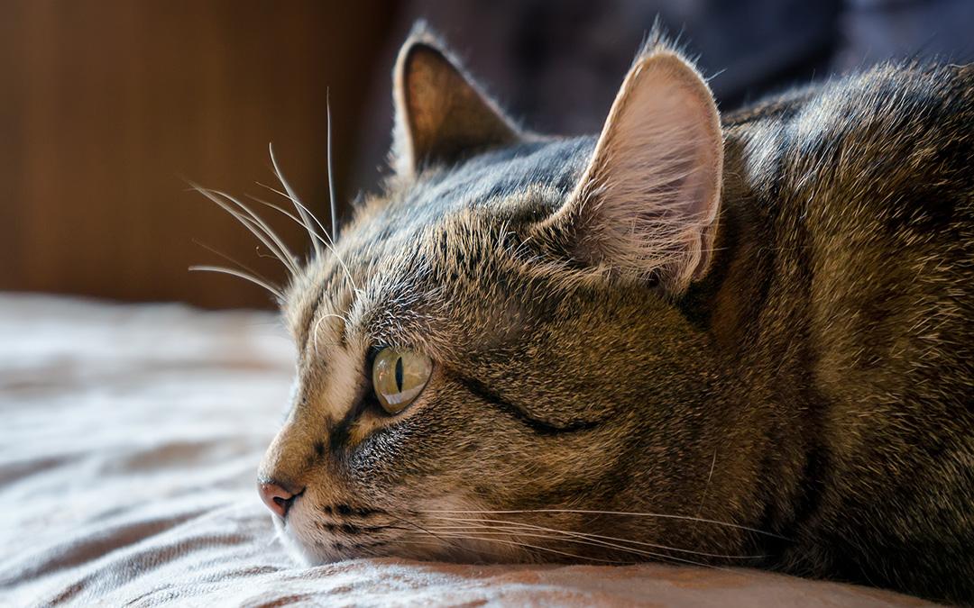 Pets com doença renal: uma ameaça silenciosa