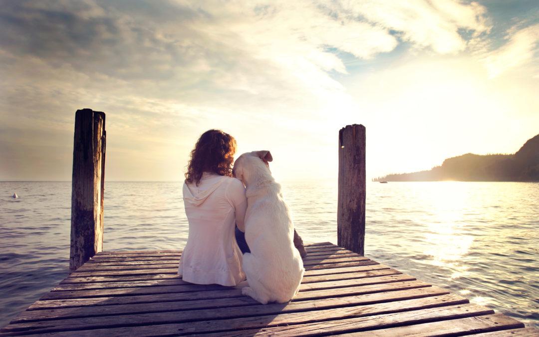 Uso de psicologia melhora o comportamento do cachorro