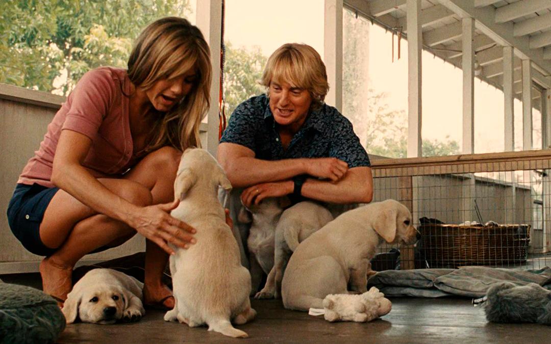 13 filmes bons pra cachorro