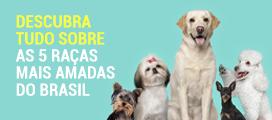 5 Raças mais Amadas do Brasil