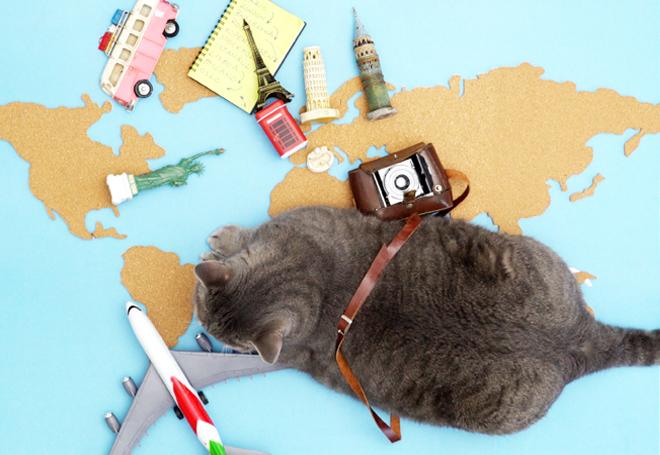 Viajar com o pet é bom, mas exige cuidados