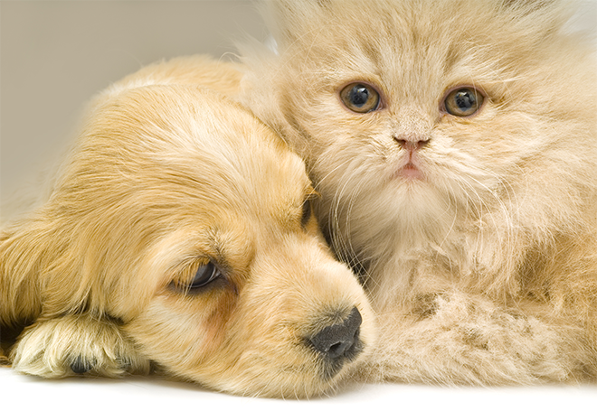 Castração em cães e gatos: saiba tudo sobre esse procedimento