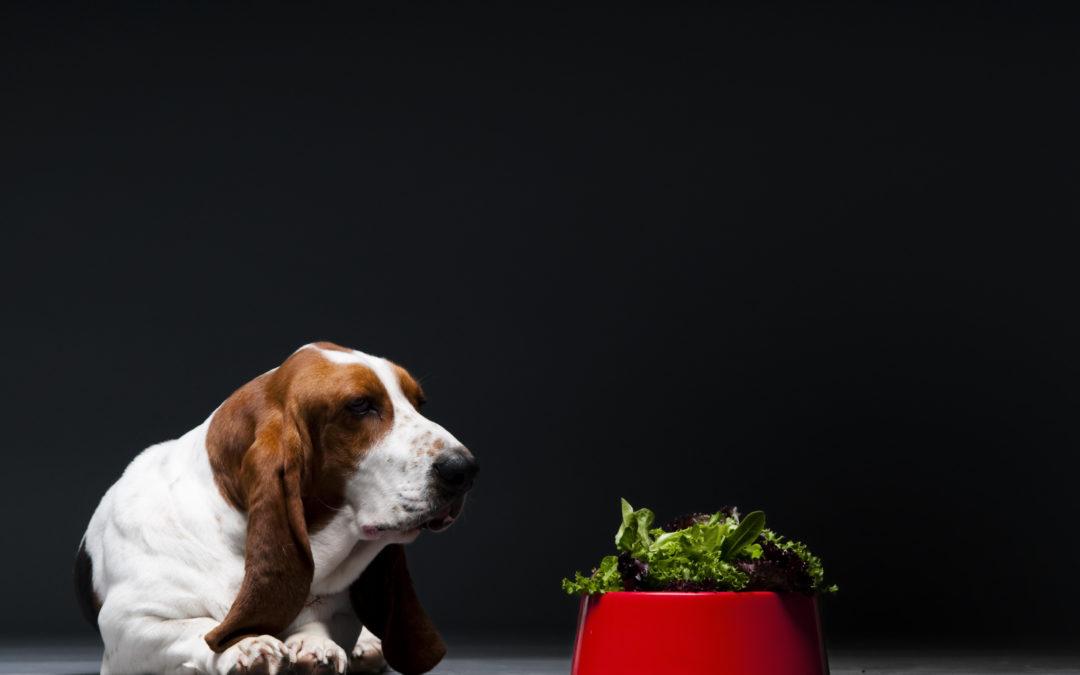 Alimentação vegana para pets