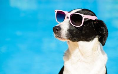 7 dicas para curtir o verão com seus pets