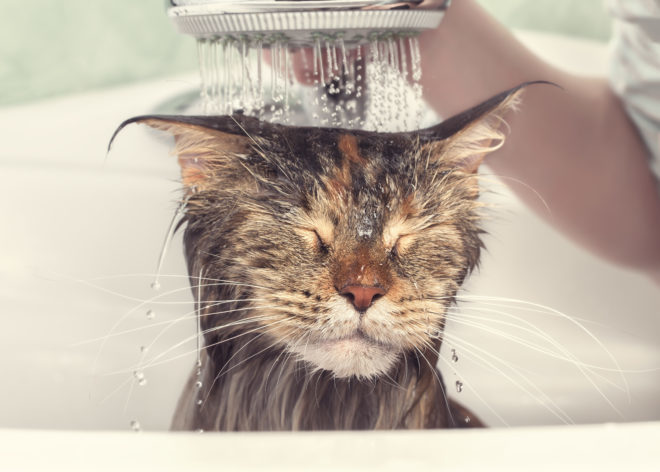 Wet cat in the bath