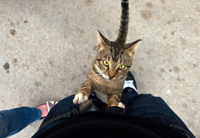 gato-marcando-território