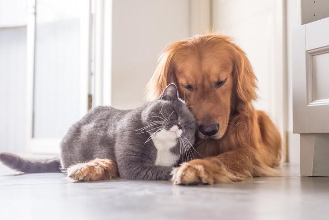 5 dicas para quem tem cães e gatos na mesma casa