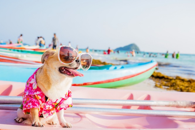 10 cãezinhos tão fofos que fazem você desejar ser o tutor deles