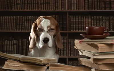 10 livros que todo amante de cachorros vai amar