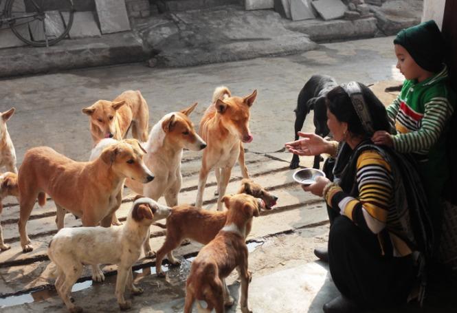 Você sabe como ajudar animais de rua em Joinville?