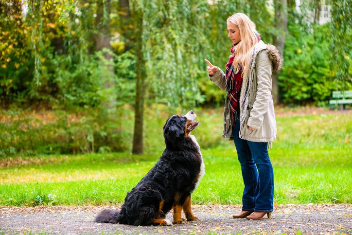 Adestramento para cães é um ato de carinho