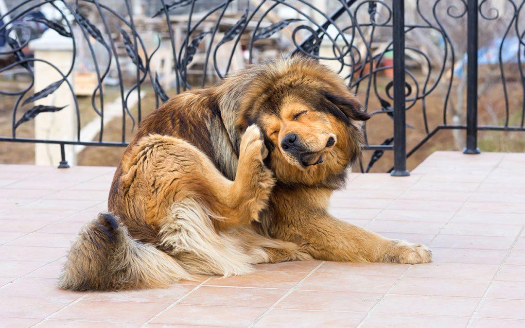 Alergia canina: como lidar?