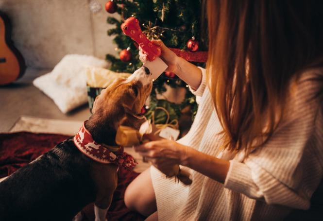 Brinquedos para cachorros: saiba qual é a melhor opção para o seu pet!