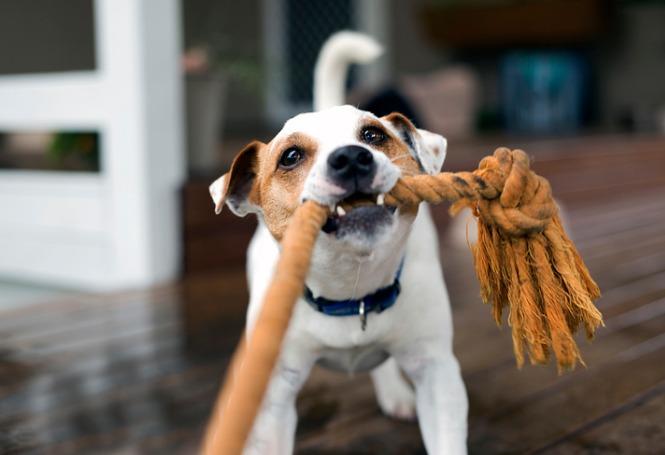 Ambientes estimulantes para pets: garantia de diversão e bem-estar