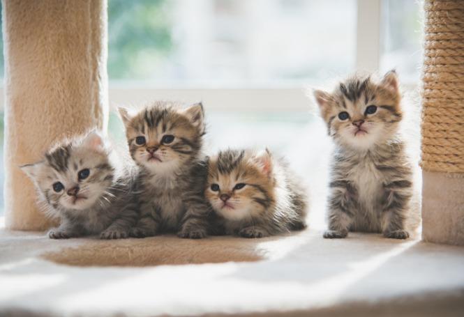 Nomes para gatos de acordo com a personalidade: como chamar o seu?