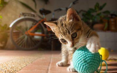 5 motivos para adotar um gatinho!