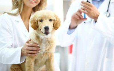 Vacina em cães e gatos: para quê?