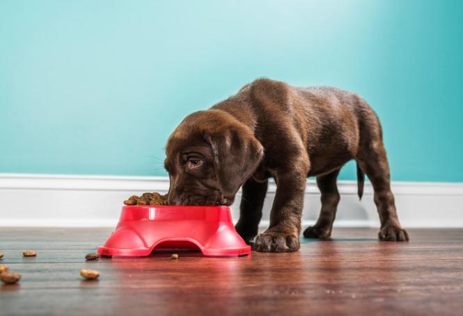Conheça os benefícios de potes de ração elevados para pets