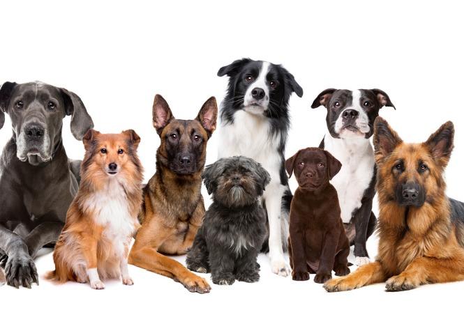 Nomes para cachorros: descubra como chamar o seu