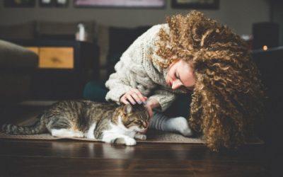 10 formas que os gatos demonstram carinho