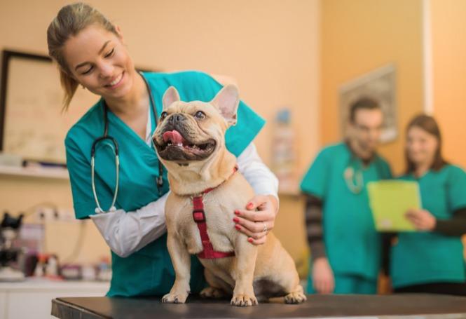Endoscopia em pets: tudo o que você precisa saber