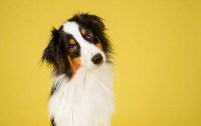 Leishmaniose canina: saiba como prevenir