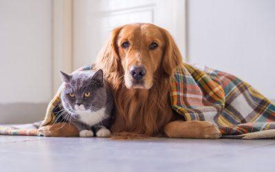 ATENÇÃO: cães e gatos precisam de cuidados especiais no inverno