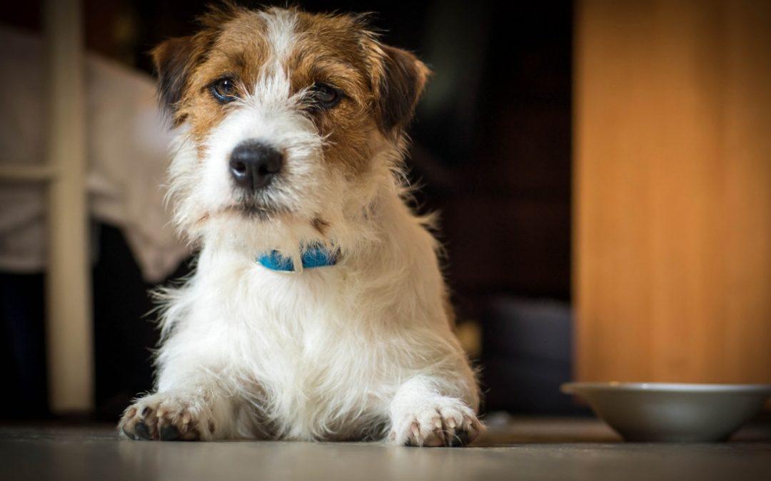 O que são zoonoses em pets?