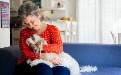 Verminoses em pets: entenda o que é e como prevenir