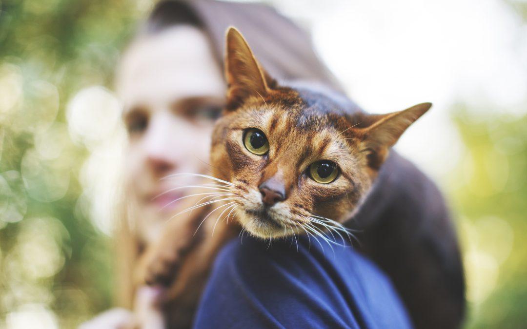Envenenamento em animais: tudo o que você precisa saber