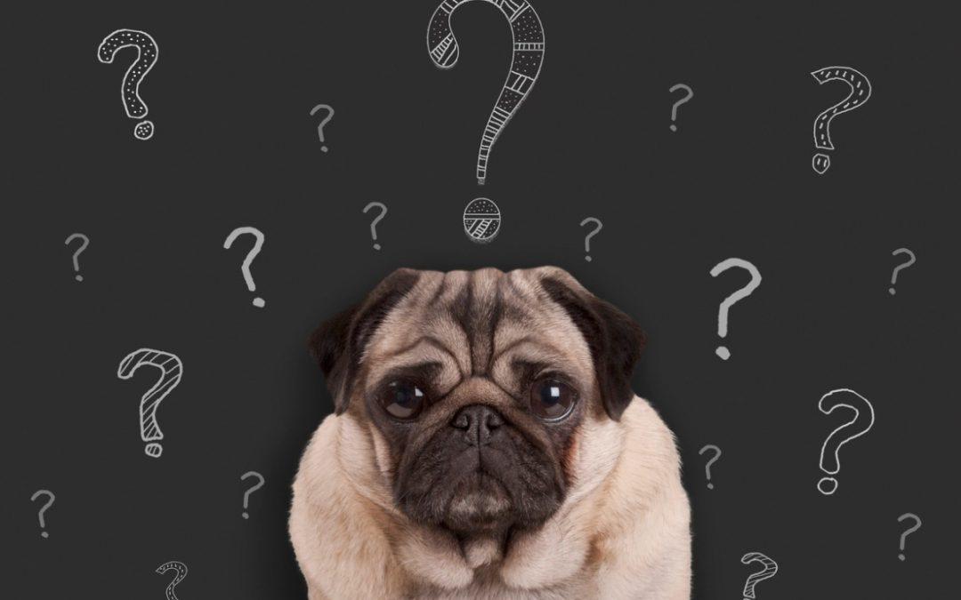 Faça o teste e descubra com qual personalidade canina o seu cachorro se parece!