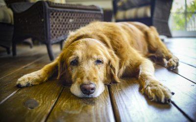 Desidratação em cães e gatos: saiba como proceder