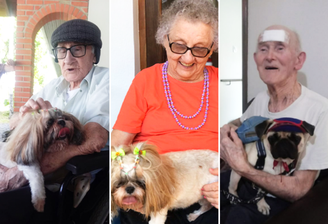 Você sabia? Animais fazem bem à saúde de pessoas idosas