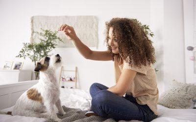 O que fazer na quarentena com o seu pet?