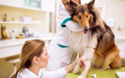 Doação de sangue animal: entenda a importância e necessidade