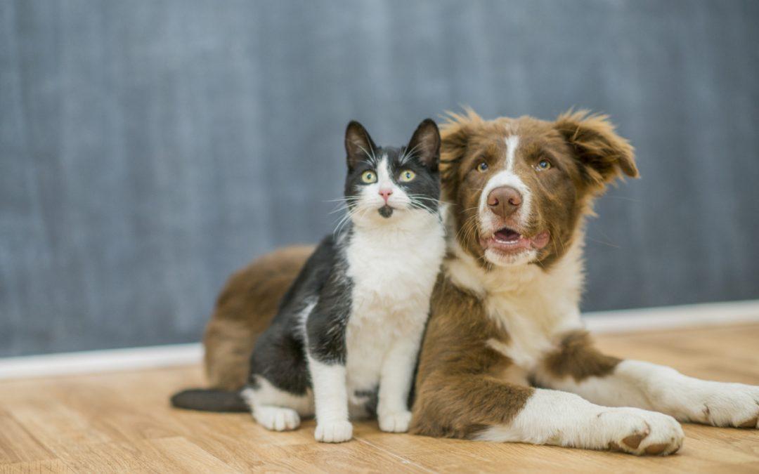 Hipertensão em cães e gatos: entenda o que é e como afeta os animais