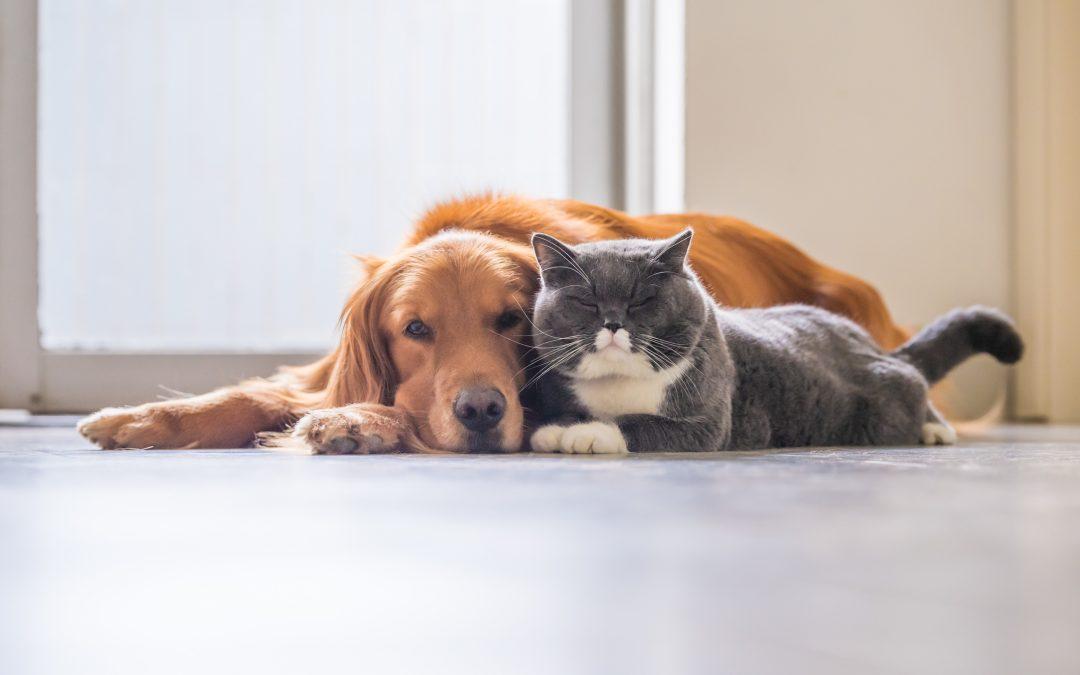 Estresse em cães e gatos: como a quarentena impacta na vida dos pets?