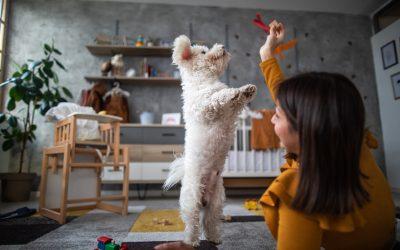Cuidados com cães e gatos: conheça os 9 erros mais comuns que tutores cometem