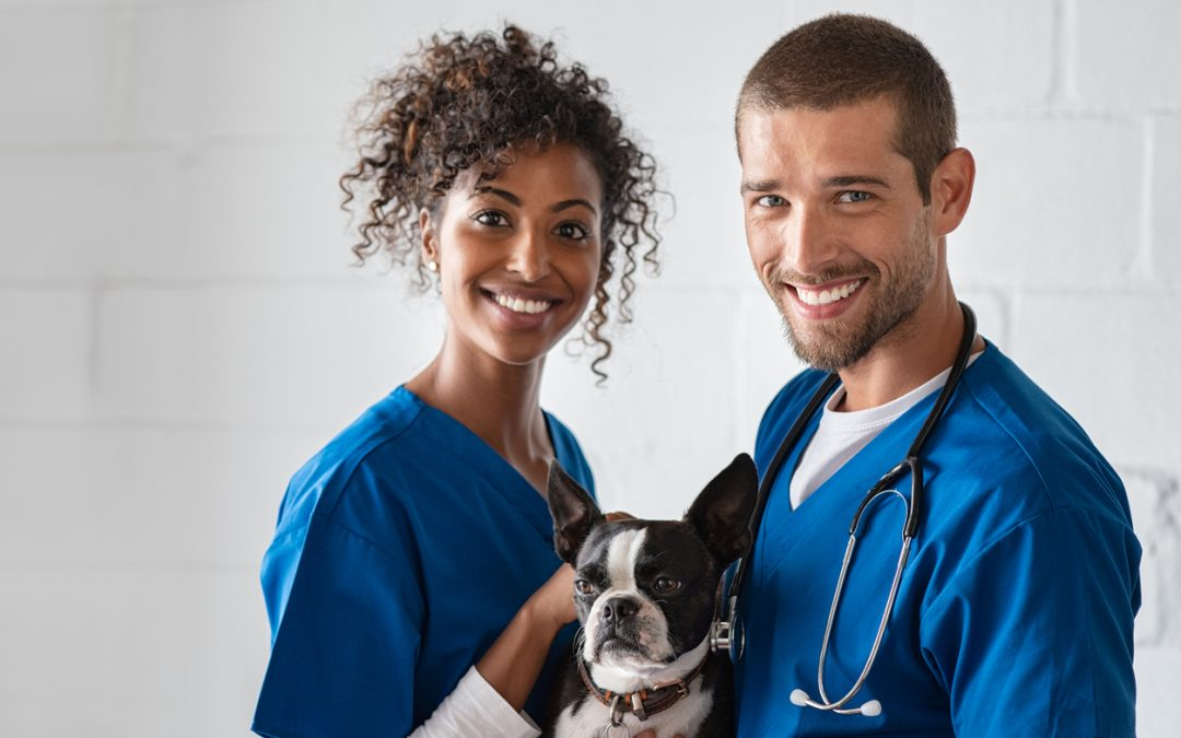 Oftalmologia veterinária: nova especialidade do Vet Plus