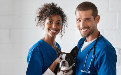 Oftalmologia veterinária: nova especialidade do Vet Plus
