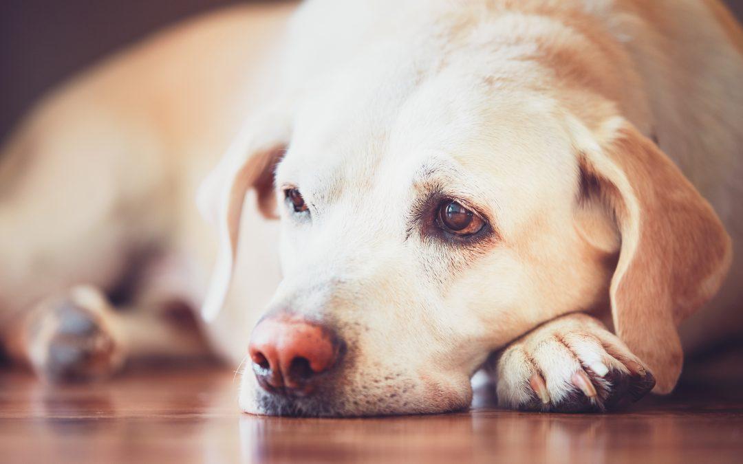 O que é osteossarcoma em cachorro?