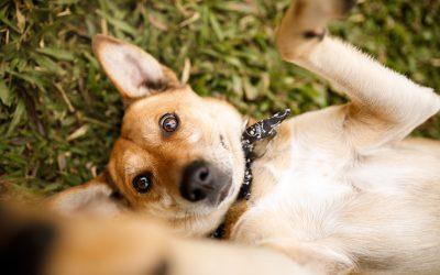 Adoção responsável de pets: confira o passo a passo