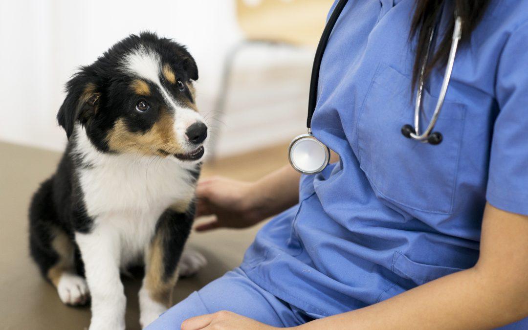 Gastroenterologia: conheça a área que cuida da saúde gastrointestinal do seu pet