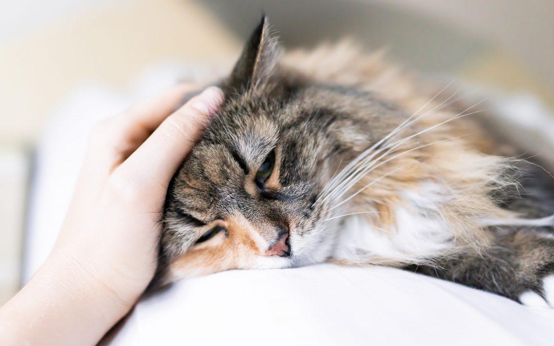 Esporotricose: proteja seu pet da doença da roseira