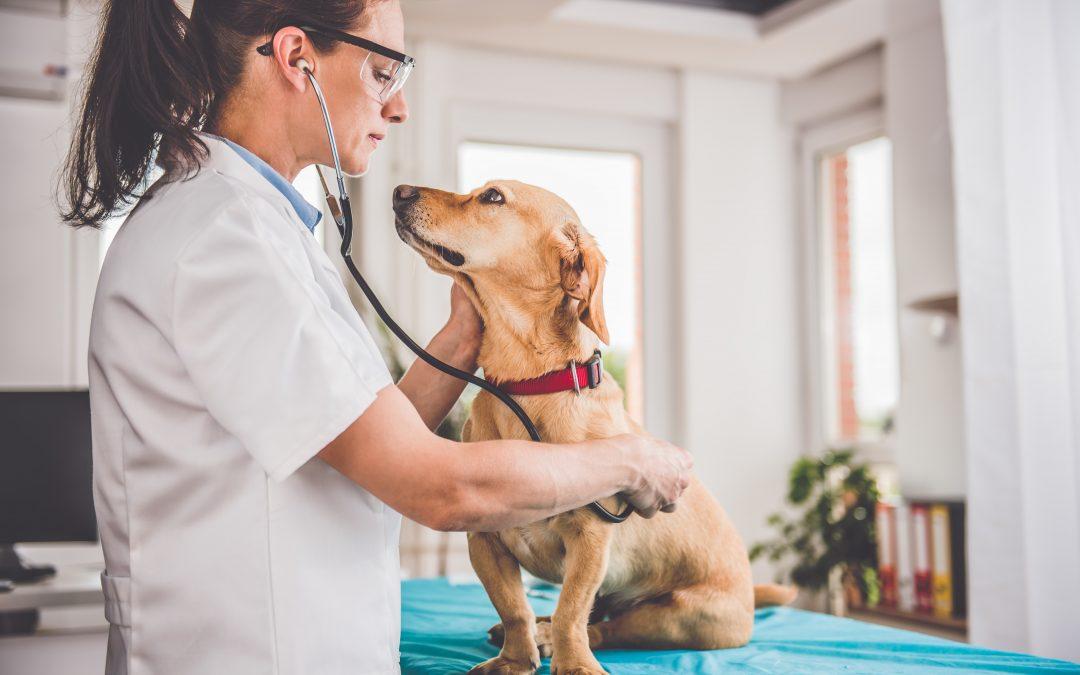 Hemodiálise em cães: conheça o novo serviço do Hospital Vet Plus