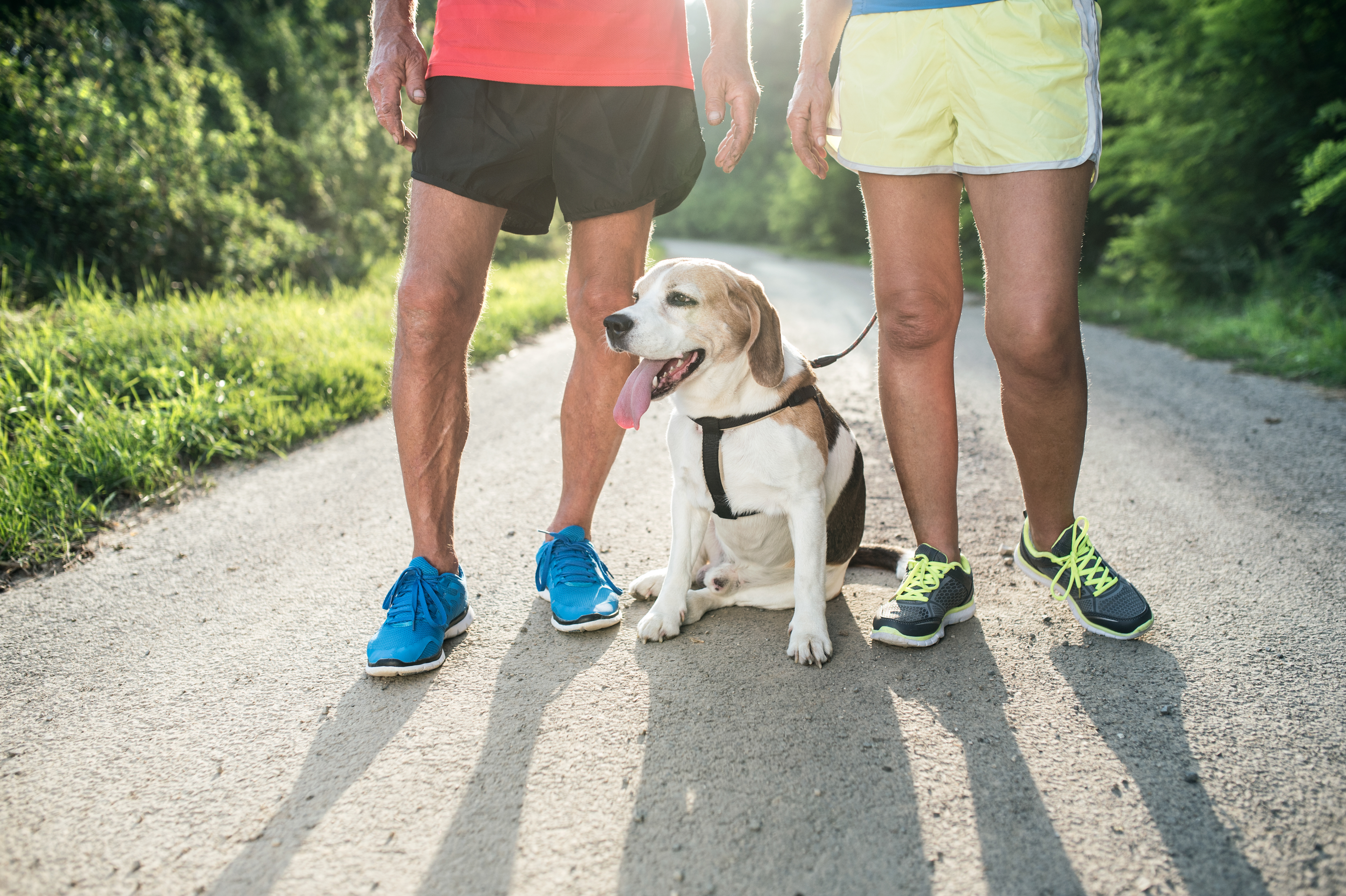 Unrecognizable senior couple on a run with their dog outside in green nature