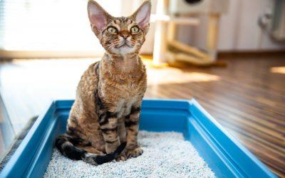 FIV felina: sintomas, diagnóstico e tratamento